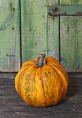 Pumpkin (variety: Kamo Kamo)