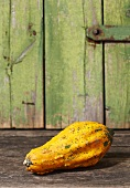 Yellow ornamental gourd (variety: Maya Mix)