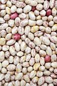 Borlotti beans, full-frame