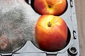Mouldy nectarines in packaging (close-up)