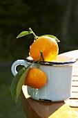 Ornamental oranges in a mug