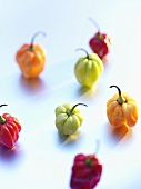 Habanero chillies of various colours