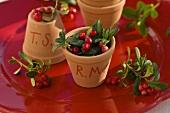 Cranberries in terracotta pots