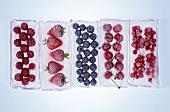 Fruit frozen in blocks of ice