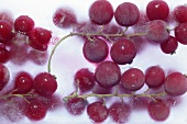 Redcurrants frozen in a block of ice (close-up)