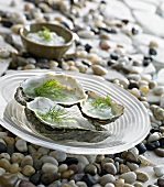 Oysters with dill sauce
