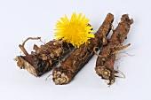 Dandelion roots with dandelion flower
