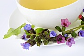 A cup of lungwort tea with fresh flowers