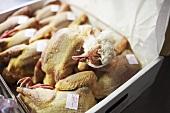 Fresh pigeons in a cardboard box
