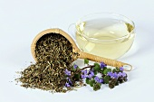 Ground ivy tea (Glechoma hederacea)