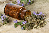 Dried ground ivy (Glechoma hederacea) in apothecary bottle