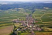 Weinlandschaft bei Obermarkersdorf, Weinviertel, Österreich