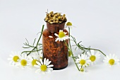 Fresh and dried chamomile flowers in small bottle