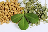 Fenugreek (seeds, fresh and dried leaves)