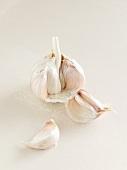 Garlic bulb with cloves of garlic
