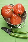 Tomatoes in colander, secateurs beside it