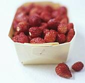 Wild strawberries in woodchip basket