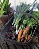 Carrots, red onions and leeks in trug