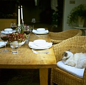 Cat sitting in rattan chair at laid table