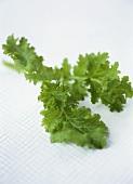Tatsoi (Asian leafy vegetable)