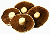 Four Portabella mushrooms (undersides)