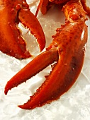 Cooked lobster claws on ice