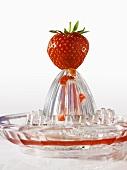 Strawberry on citrus squeezer