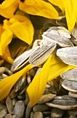 Sunflower petals and seeds