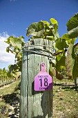 'Pinot noir' sign, New Zealand