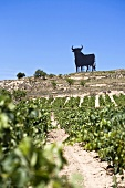 The famous Sherry Bull, Rioja, Spain