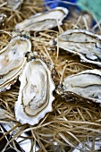 Oysters on a market stall in Libourne, Bordeaux, France