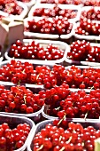 Redcurrants on a market stall, Belgium
