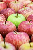 Green apple (Granny Smith) among red apples (Royal Gala)