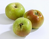 Three cooking apples (variety: Bramley)