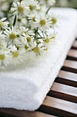 White asters on towel