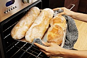 Taking ciabatta out of the oven