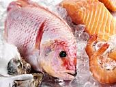 Ein Red Snapper mit Lachs, Garnelen und Austern