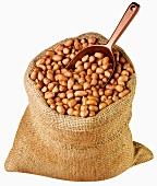 Shelled peanuts in jute sack with scoop