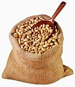 Soya nuts in jute sack with scoop