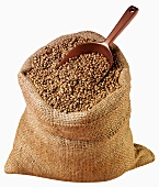 Brown beans from India in jute sack with scoop
