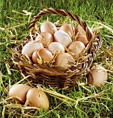 Hen's eggs in a basket on grass