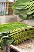 Piles of banana leaves (Singapore)