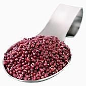 Azuki beans on a spoon