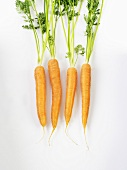 Four carrots with leaves