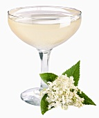 A glass of champagne with elderflower syrup & elderflowers