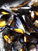 Cooking mussels in white wine