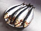Six sardines on a plate