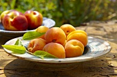 Apricots and nectarines on plates out of doors