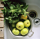 Freshly washed green apples in colander with mint