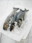 Sea bass and trout on crushed ice and paper